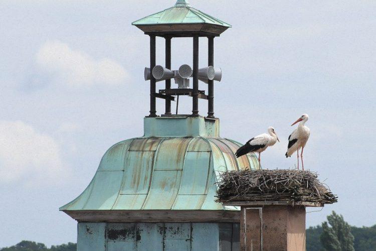 les cigognes et le clocheton de la mairie